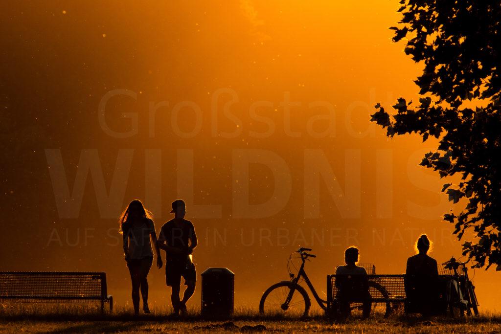 Sonnenuntergang_Decksteiner Weiher_Köln_Tiere in der Stadt_Stadtnatur_Keynote Speaker_Multivision