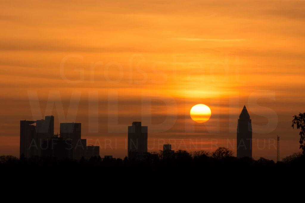 Sonnenuntergang_vom Lohrberg_Skyline_Frankfurt_Tiere in der Stadt_Stadtnatur_Keynote Speaker_Multivision
