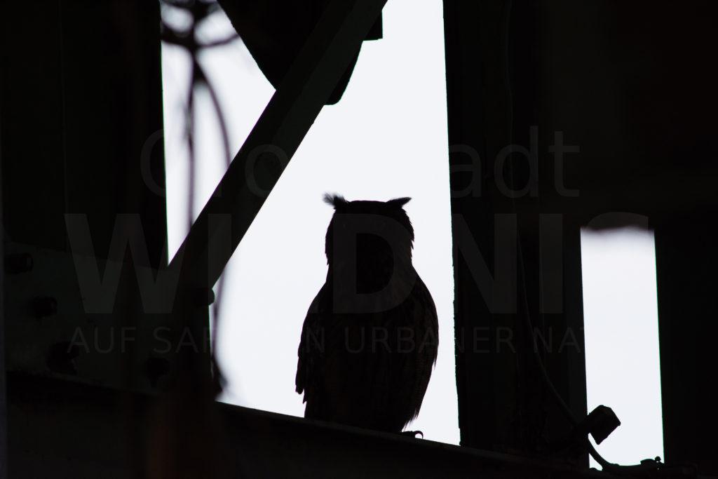 Uhu_Männchen_Silhouette schwarz weiß_Ewald_Ruhrgebiet_Tiere in der Stadt_Stadtnatur_Keynote Speaker_Multivision